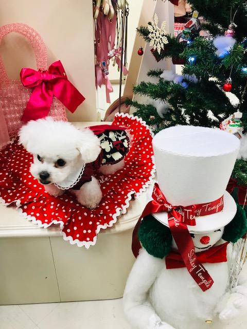 ワンちゃんクリスマス